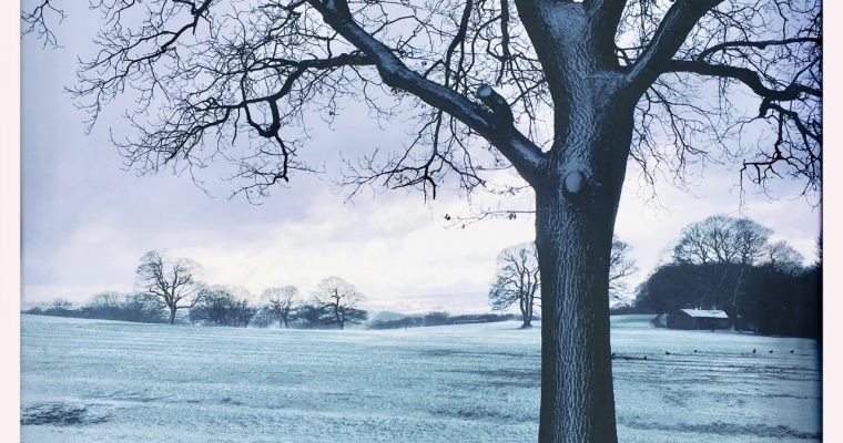 A little snowy interlude